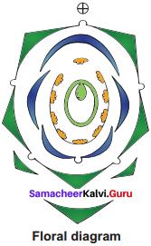Samacheer Kalvi 11th Bio Botany Solutions Chapter 5 Taxonomy and Systematic Botany 3