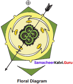 Samacheer Kalvi 11th Bio Botany Solutions Chapter 5 Taxonomy and Systematic Botany 5