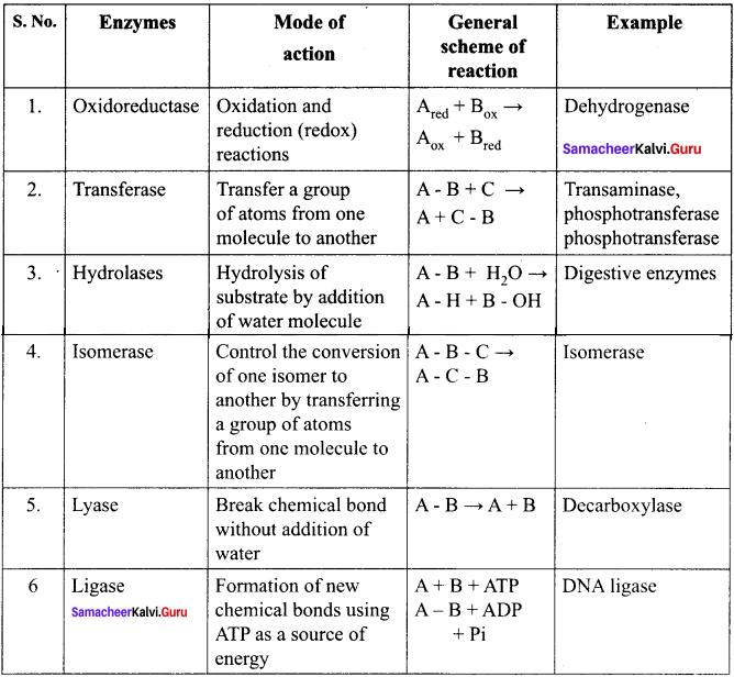 Samacheer Kalvi 11th Bio Botany Solutions Chapter 8 Biomolecules 5