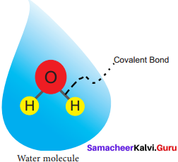 Samacheer Kalvi 11th Bio Botany Solutions Chapter 8 Biomolecules 7