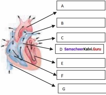 Samacheer Kalvi 11th Bio Zoology Solutions Chapter 7 Body Fluids and Circulation img 1-1
