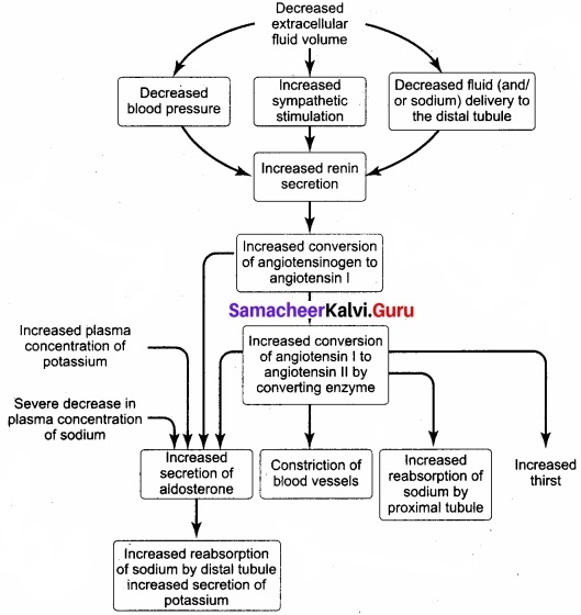 Samacheer Kalvi 11th Bio Zoology Solutions Chapter 8 Excretion img 1
