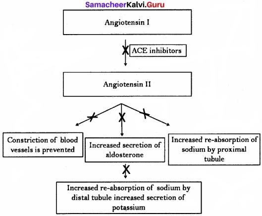 Samacheer Kalvi 11th Bio Zoology Solutions Chapter 8 Excretion img 2