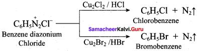 Samacheer Kalvi 12th Chemistry Solutions Chapter 13 Organic Nitrogen Compounds-137