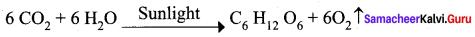 Samacheer Kalvi 12th Chemistry Solutions Chapter 14 Biomolecules-31