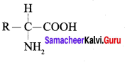 Samacheer Kalvi 12th Chemistry Solutions Chapter 14 Biomolecules-35