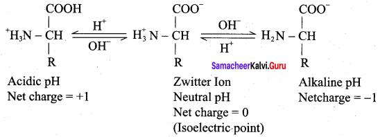 Samacheer Kalvi 12th Chemistry Solutions Chapter 14 Biomolecules-36