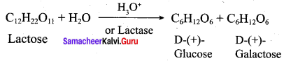 Samacheer Kalvi 12th Chemistry Solutions Chapter 14 Biomolecules-37