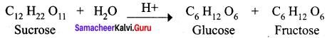 Samacheer Kalvi 12th Chemistry Solutions Chapter 14 Biomolecules-38