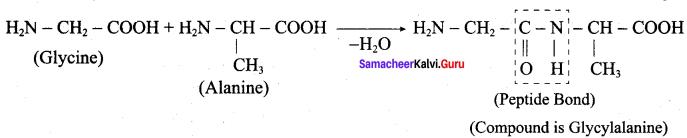 Samacheer Kalvi 12th Chemistry Solutions Chapter 14 Biomolecules-5