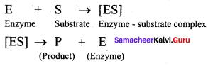 Samacheer Kalvi 12th Chemistry Solutions Chapter 14 Biomolecules-53