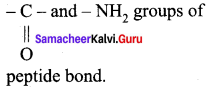 Samacheer Kalvi 12th Chemistry Solutions Chapter 14 Biomolecules-59