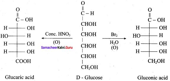 Samacheer Kalvi 12th Chemistry Solutions Chapter 14 Biomolecules-62