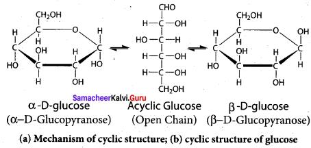 Samacheer Kalvi 12th Chemistry Solutions Chapter 14 Biomolecules-66