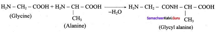 Samacheer Kalvi 12th Chemistry Solutions Chapter 14 Biomolecules-7