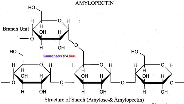 Samacheer Kalvi 12th Chemistry Solutions Chapter 14 Biomolecules-73