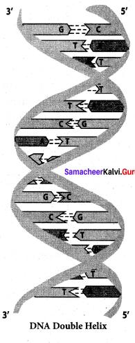 Samacheer Kalvi 12th Chemistry Solutions Chapter 14 Biomolecules-77