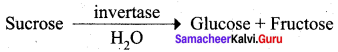Samacheer Kalvi 12th Chemistry Solutions Chapter 14 Biomolecules-79