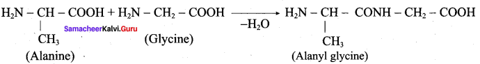 Samacheer Kalvi 12th Chemistry Solutions Chapter 14 Biomolecules-8