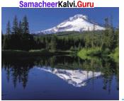 Samacheer Kalvi Guru 8th Science Solutions Term 1 Chapter 3 Light