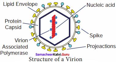 Samacheer Kalvi Guru 8th Science Solutions Term 1 Chapter 6 Micro Organisms