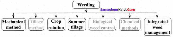8th Crop Production And Management Samacheer Kalvi Science Solutions Term 3 Chapter 7