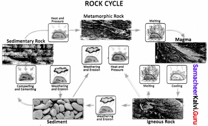 Samacheer Kalvi 8th Books Solutions Social Science Geography Term 1 Chapter 1 Rock And Soil
