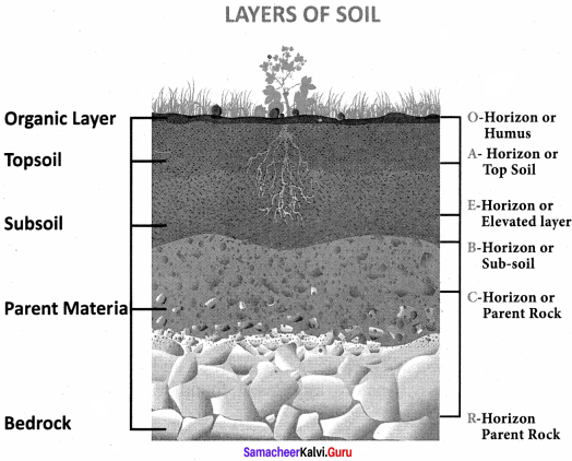 Social Samacheer Kalvi 8th Science Geography Solutions Term 1 Chapter 1 Rock And Soil