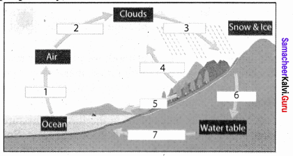 Class 8 Samacheer Kalvi Social Science Geography Solutions Term 1 Chapter 3 Hydrologic Cycle
