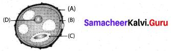 Samacheer Kalvi 10th Science Model Question Paper 2 English Medium image - 3