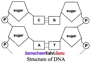 Samacheer Kalvi 10th Science Model Question Paper 3 English Medium image - 6