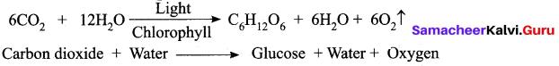 Samacheer Kalvi 10th Science Model Question Paper 3 English Medium image - 7