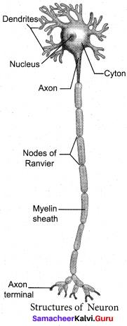 Samacheer Kalvi 10th Science Model Question Paper 4 English Medium image - 3