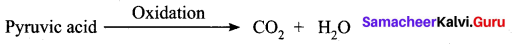 Samacheer Kalvi 10th Science Model Question Paper 4 English Medium image - 7