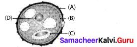 Samacheer Kalvi 10th Science Model Question Paper 5 English Medium image - 1