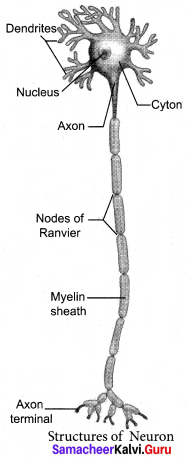 Samacheer Kalvi 10th Science Model Question Paper 5 English Medium image - 8