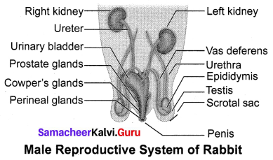 Structural Organisation Of Animals Class 10 Samacheer Kalvi Science Solutions Chapter 13