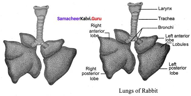 10th Science Samacheer Kalvi Solutions Chapter 13 Structural Organisation Of Animals
