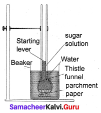 Transportation In Plants And Circulation In Animals Class 10 Samacheer Kalvi Solutions Chapter 14