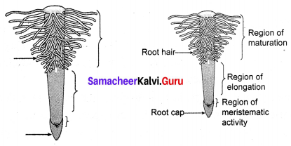 Transportation In Plants And Circulation In Animals Book Back Answers Samacheer Kalvi 10th Science Solutions Chapter 14
