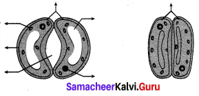 10th Science Samacheer Kalvi Solutions Chapter 14 Transportation In Plants And Circulation In Animals