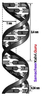 Samacheer Kalvi 10th Science Solutions Chapter 18 Heredity 3