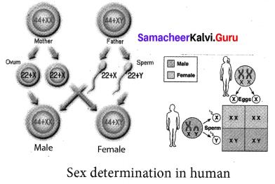 Samacheer Kalvi 10th Science Solutions Chapter 18 Heredity 4