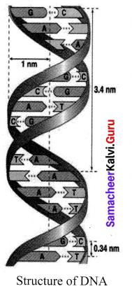 Samacheer Kalvi 10th Science Solutions Chapter 18 Heredity 9