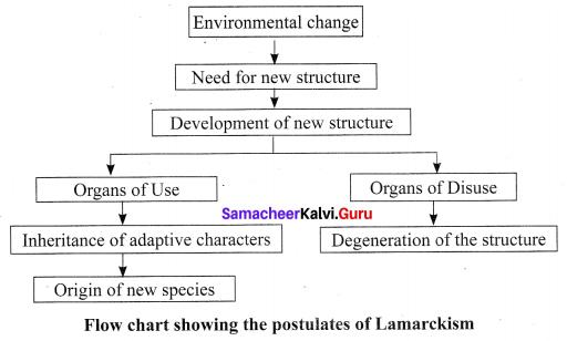 Samacheer Kalvi Guru Science 10th Solutions Chapter 19 Origin And Evolution Of Life