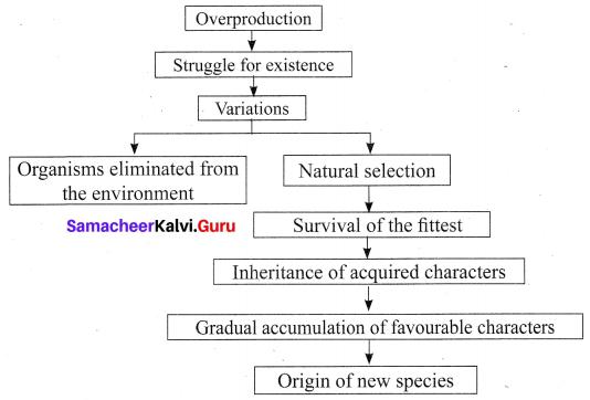 10th Science Solution Samacheer Kalvi Chapter 19 Origin And Evolution Of Life