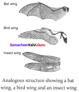 Samacheerkalvi.Guru 10th Science Solutions Chapter 19 Origin And Evolution Of Life