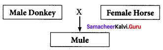 Breeding And Biotechnology Class 10 Samacheer Kalvi Science Solutions Chapter 20