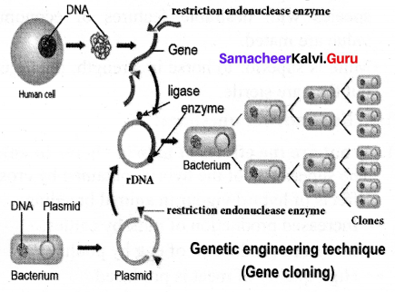 Breeding And Biotechnology In Tamil Samacheer Kalvi 10th Science Solutions Chapter 20