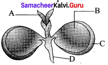 12th Botany 1st Lesson Asexual And Sexual Reproduction In Plants Samacheer Kalvi